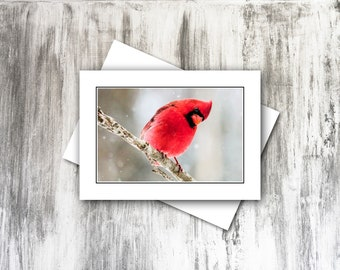 Greeting Cards, Red Cardinals, Bird Photography, Blank Inside, All Occasion Note Cards
