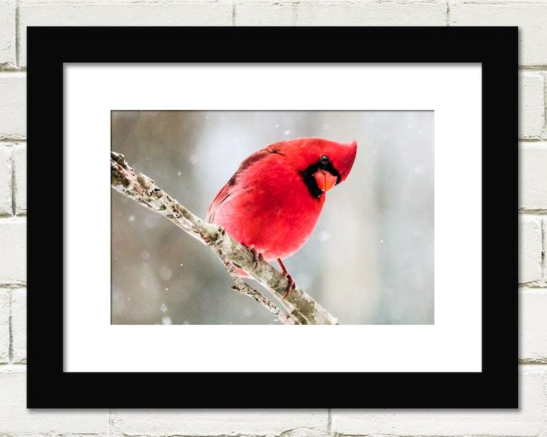 Bird Prints Red Cardinal Bird Photography Wall Art image 0