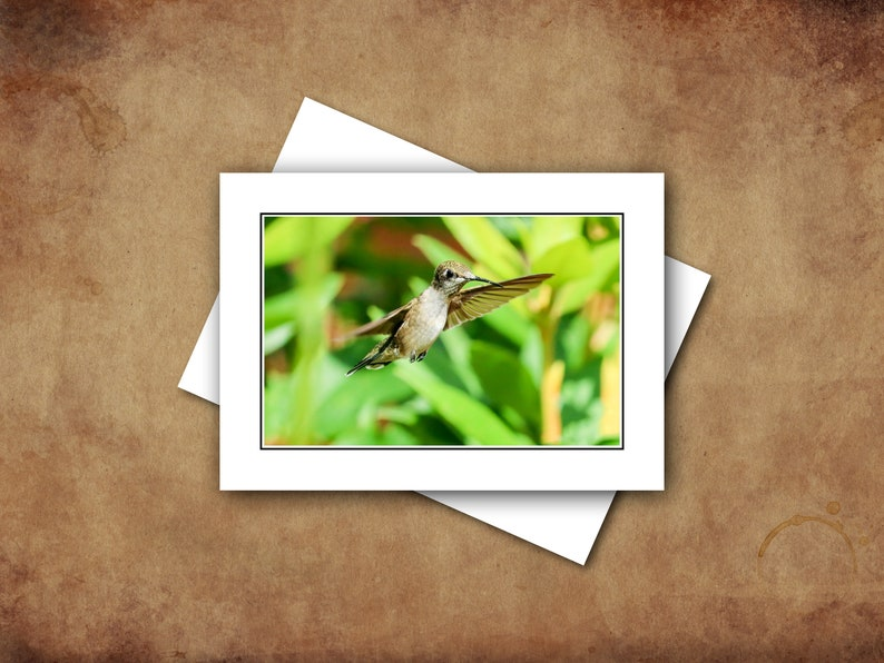 Ruby-throated Hummingbird Greeting Card Set with Envelopes image 0