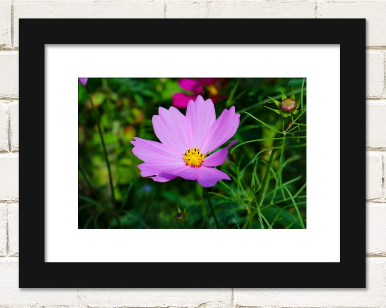 Flower Prints Flower Photography Cosmos Flowers Botanical image 0