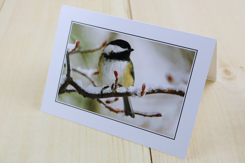 Bird Photography Nature Greeting Card Black-capped Chickadee image 0
