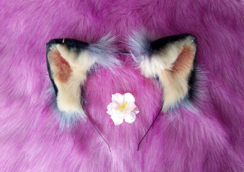 Blossom Grey ears