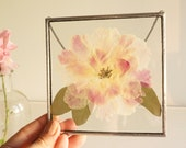 Pressed white pink peony flower in square stain glass frame Mothers day gift box 5x5 Floral wall hanging decor Dried peonies Glass herbarium