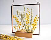 Real pressed mimosa Yellow flower frame Mother 39 s day gift Spring flower Square stain glass frame Spring wall decor Yellow floral room decor