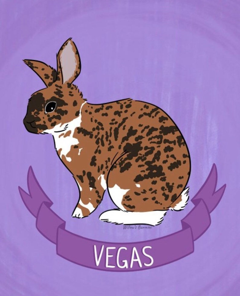 Custom Rabbit Portraits Personalized Pet cartoon