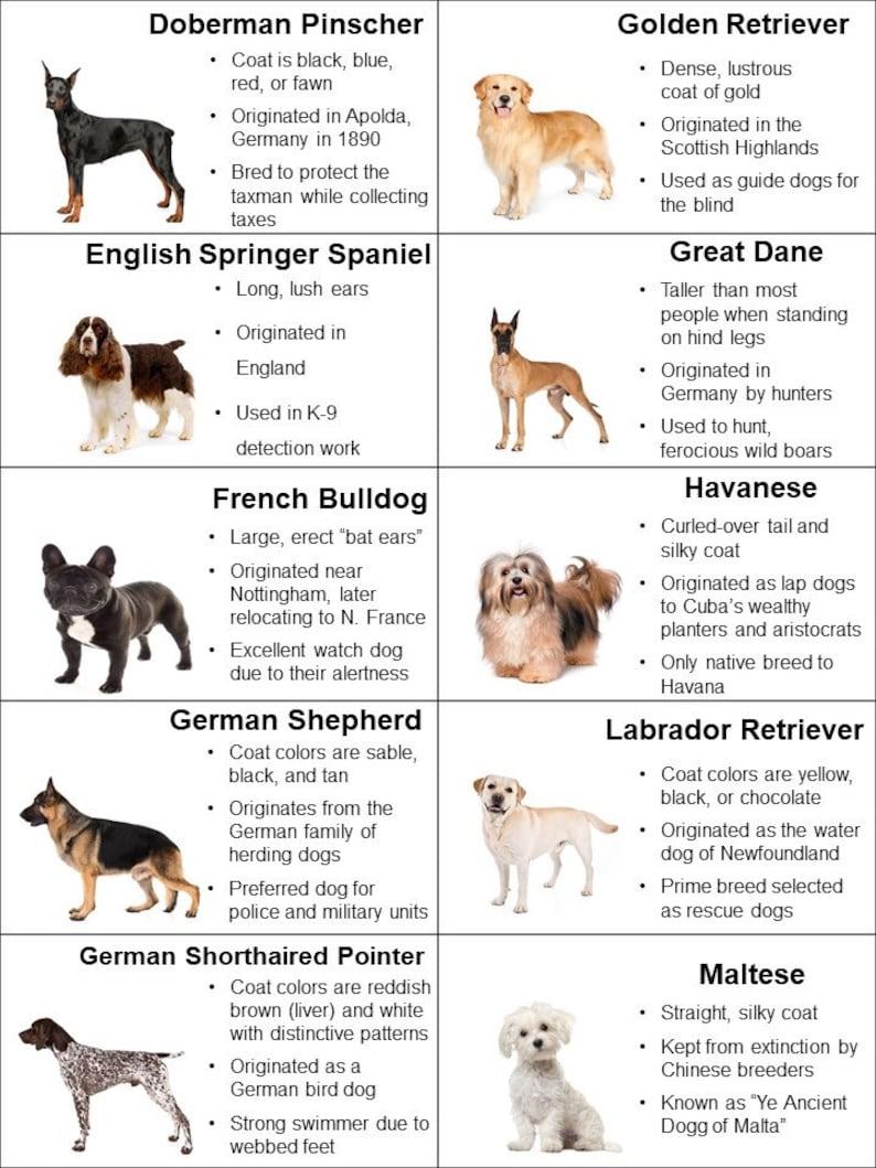 30 Puppy Dog Bingo Cards | Dog Facts | Different Dog Breeds | Bulldog | Dog  Lover Gift | Real Picture Bingo | Laminated | Unique Bingo Cards