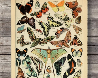 Vintage Print Art Print butterflies papillons botanical print vintage flower antique french illustration poster book print  digital download