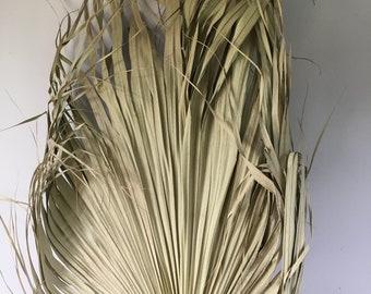 Large Sun Dried Palm Leaf Floral Boho Display