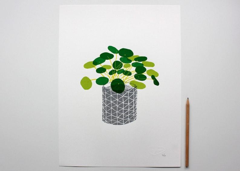 Pancake plant four-colour screen print  30 x 40cm  Limited image 0