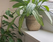 Cement rope basket indoor plant pot 18cm