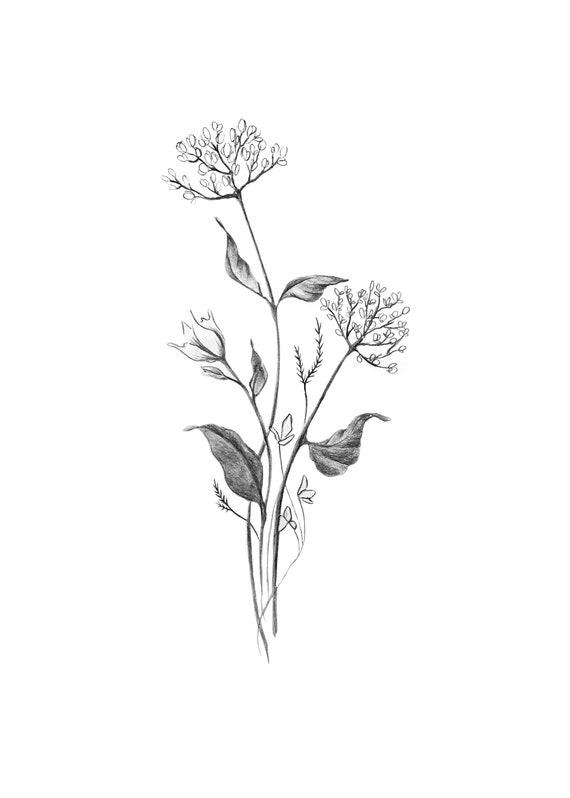 Botanical Spring Flower Bouquet Modern Minimal Drawing Of Etsy