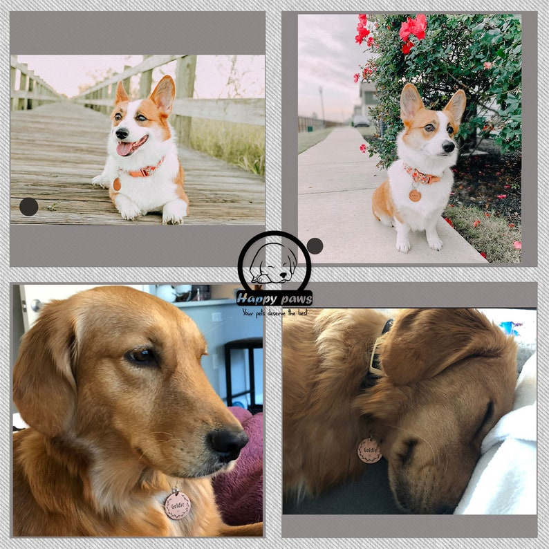 Dog Tag Pet ID Collar Tag Star Pet Tag Moon Dog Collar Tag Personalized HappyPaws