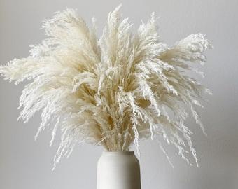 "Pampas Grass Bunch Ivory 27"" tall - Natural Home Office Decor Boho Wedding Decor DIY Rustic Decor Bridal Bouquet"