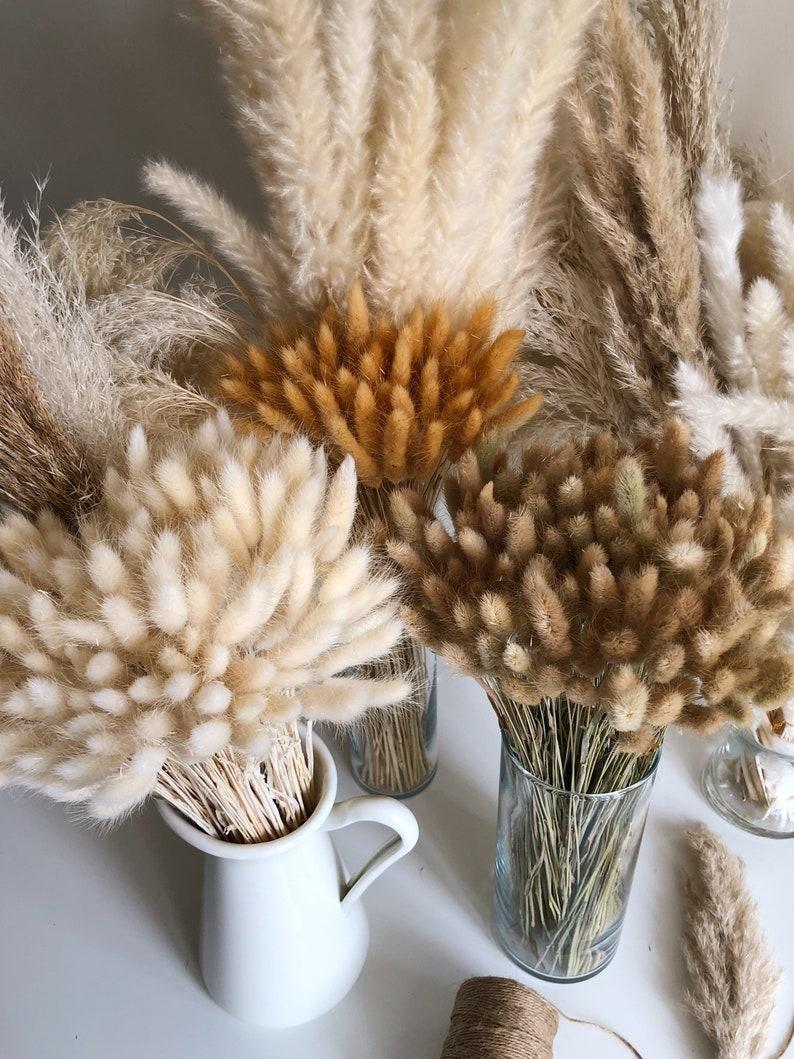 BUNNY TAILS 50 pcs  Natural Dried Lagurus Pampas Grass Boho image 0