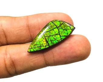 Top Quality Cabochons 100 /% Natural Gemstone 6x14 MM Natural Ammolite Fossil Gemstone Iridescent Matrix For One Piece