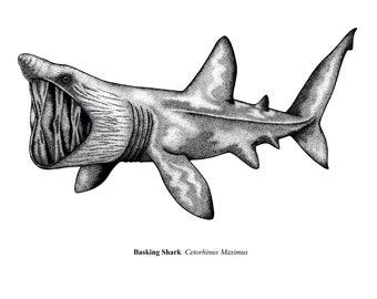 Basking Shark - A4 Limited Edition Print