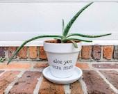Aloe you Vera much planter