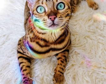 Somewhere Over the Rainbow   Cat print   Adventure Cat Poster