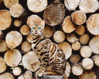 Catouflage   Cat print   Adventure Cat Poster