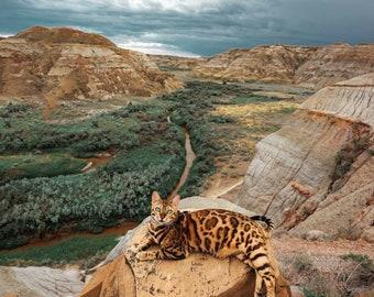 Badlands   Cat Print   Cat Poster   Home Decor