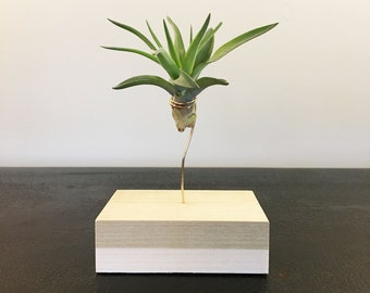 Air Lift:  Air Plant and Holder (Poplar & Wire)