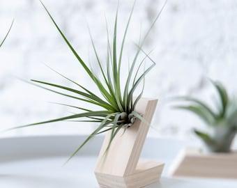 Fresh Air: Air Plant & Holder (Wood)