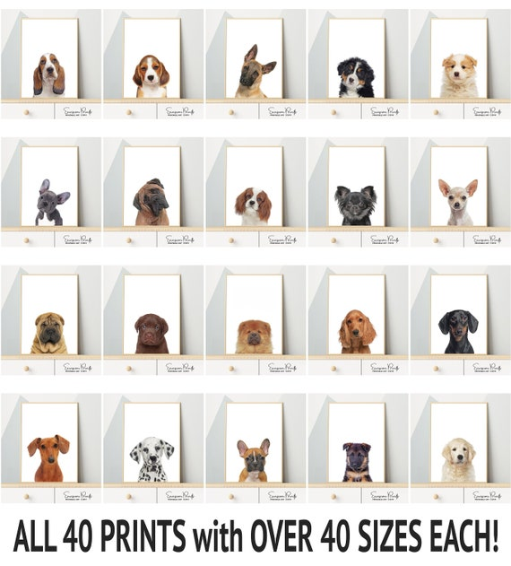 A2 sizes Puppy In Snow Cotton Canvas Wall Art Picture Print A1