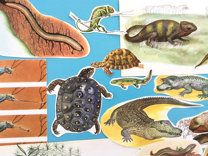 Vintage ephemera paper craft supply school project cut out reptiles collage kit