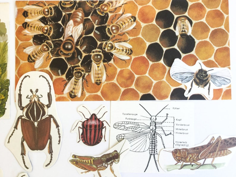 Vintage paper ephemera for your scrapbook or junk journal collage kit cut out insects