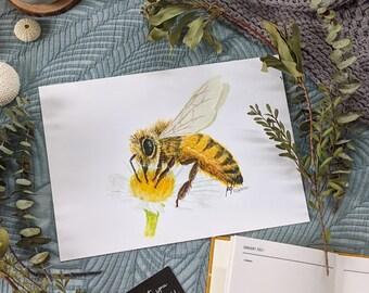HOLLY - Honey Bee  ( 6x4 /  A4 / A3 )