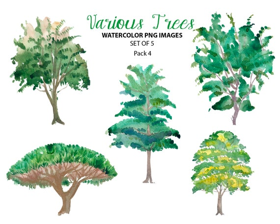 watercolor woodland clip art various trees illustrations etsy etsy