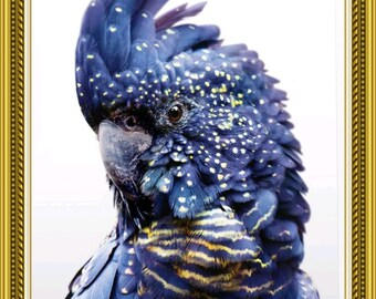 Black cockatoo   Etsy