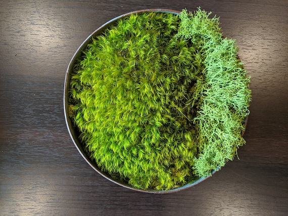 Preserved Moss Decor In Rustic Metal Container
