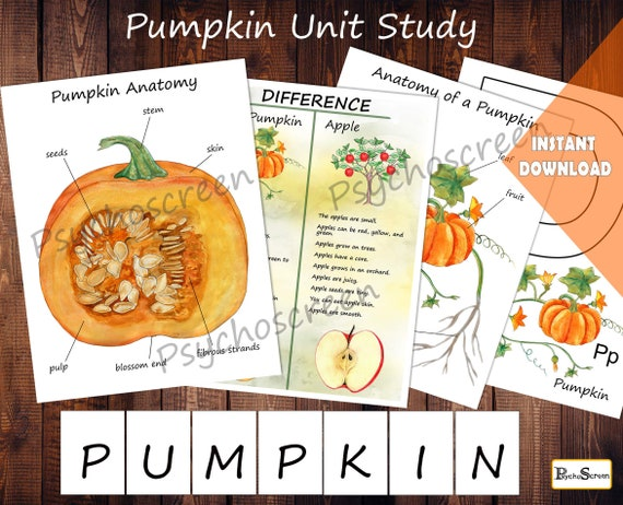PUMPKIN Unit Study  MINI Printable pumpkins bundle  Anatomy