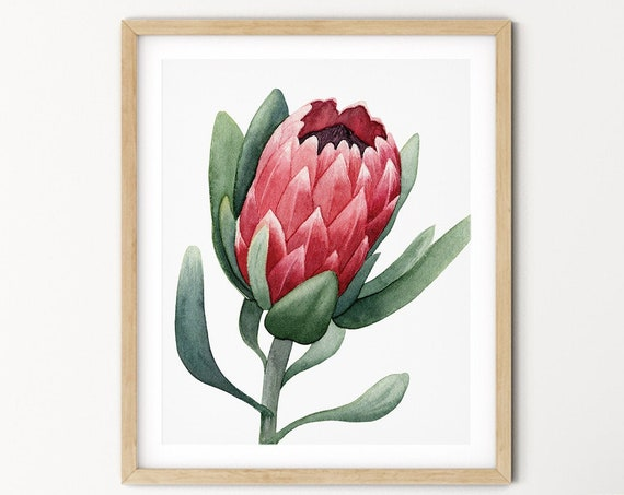 King Protea Greenery Art Digital Print | Printable Plant Art | Still Life Art Print | Australian Native Plant Wall Art | Protea Leaf Print