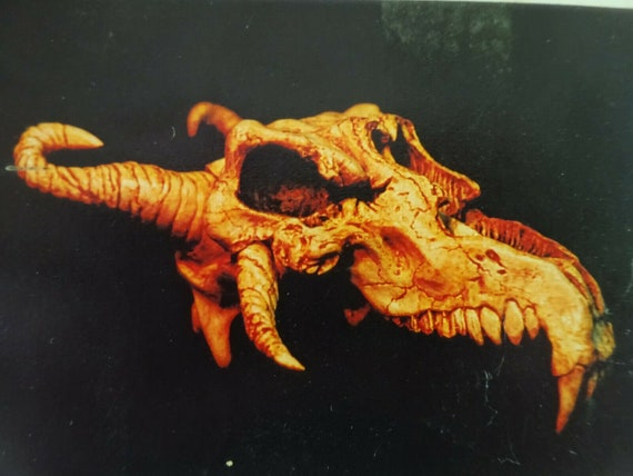 Dragon Skull, Larp, Decoration, Kit, Dragon, Drago
