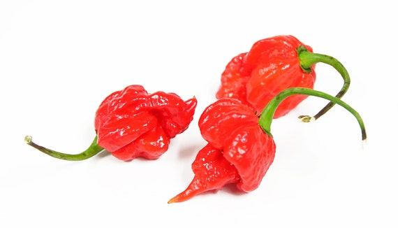 capsicum chinense Peppers Organic Trinidad Scorpion Edible Seeds Heirloom