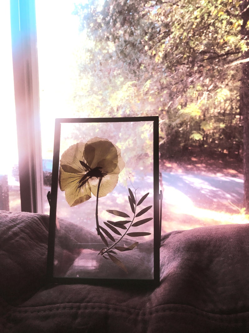 Bright Days  Pressed plants in a clear frame  Pressed Yellow image 0