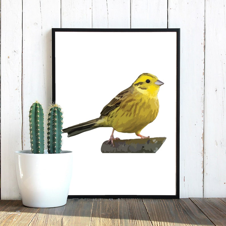 Yellowhammer Bird SVG Yellowhammer Yellowhammer Clipart image 0