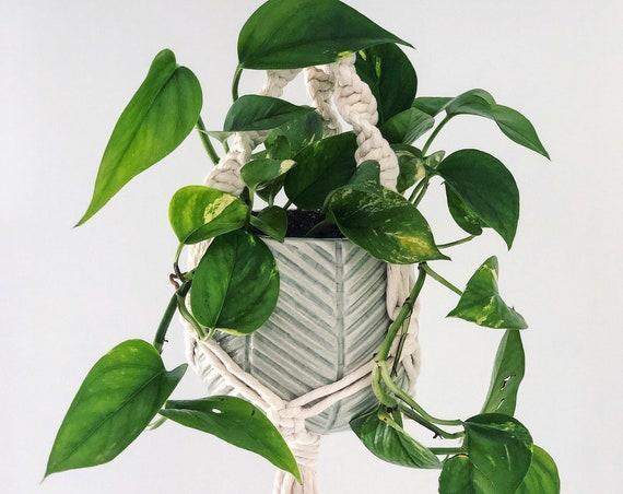 Meryl Plant Hanger