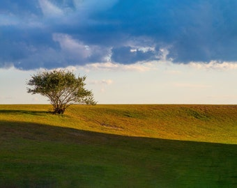 The Lone Tree by Shawn Pearce print