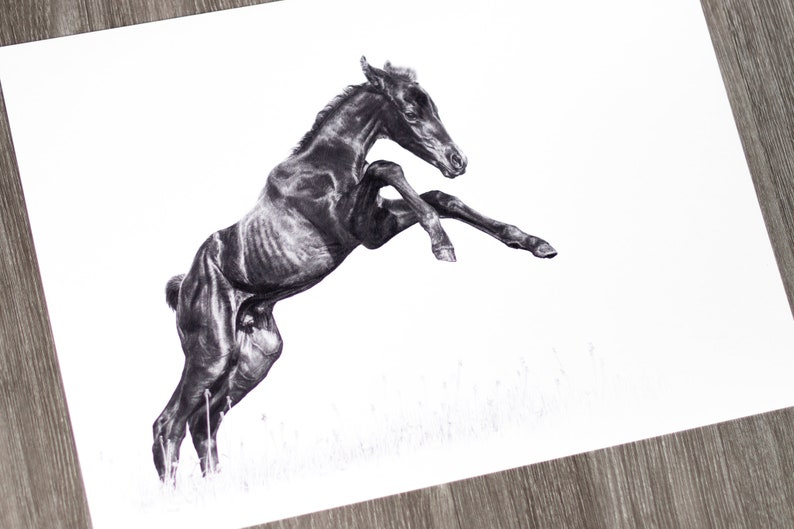 Art Print  Olympic Speed  Foals  Pencil Drawing  A3 image 0