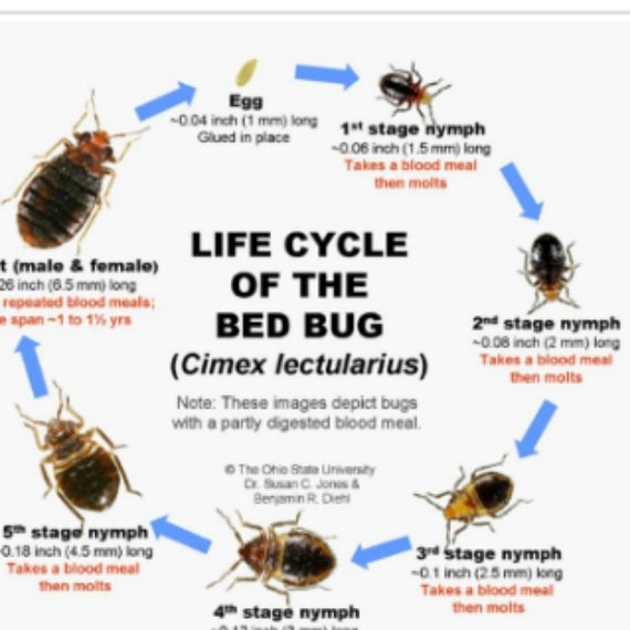 Don T Let The Bed Bugs Bite Bedbug Dusting Powder Repellent Hunger Deterrent And Killer 3 For The Price Of One Non Toxic 1lb