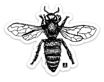 BellavanceInk: Honey Bee Art Pen & Ink Drawing Vinyl Sticker