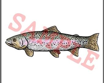 BellavanceInk: Rainbow Trout Pen And Ink Watercolor Illustration Vector/Raster Image