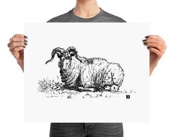 BellavanceInk: Pen & Ink Drawing of a Laying Ram Print