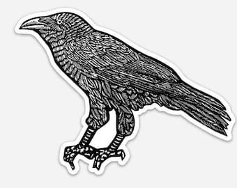 BellavanceInk: Raven Vinyl Sticker Pen and Ink Illustration