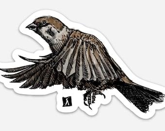 BellavanceInk: Sparrow Backyard Bird  Vinyl Sticker Pen and Ink Illustration