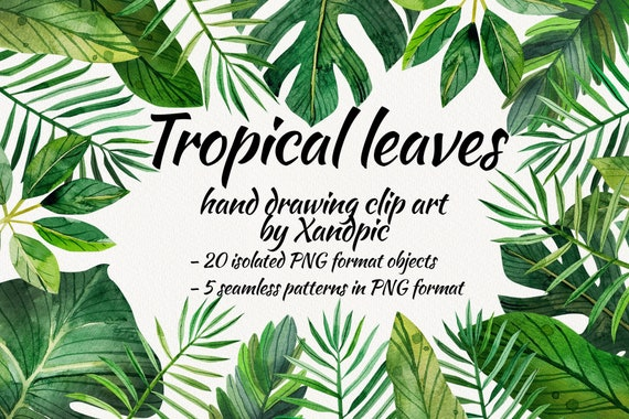 Watercolor Tropical Leaves Clip Art Digital Drawing Tropical Etsy 1502 x 1700 jpeg 407 кб. watercolor tropical leaves clip art digital drawing tropical leaves for decoration high resolution and instant download