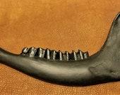 Bison Jaw Bone - American Buffalo - Painted Black